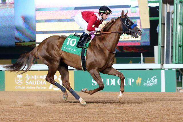 Mucho Gusto (hier in Riad) siegte im vergangenen Jahr im Pegasus World Cup. www.galoppfoto.de - Peter Heinzmann