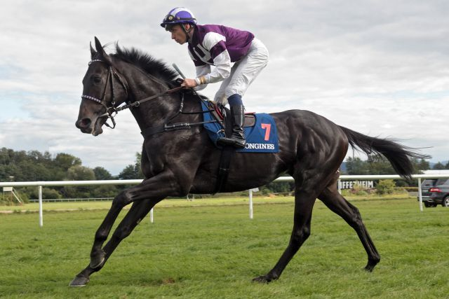 Andreas Löwes Palace Prince startet in den Champions Stakes in Ascot. www.galoppfoto.de - Frank Sorge