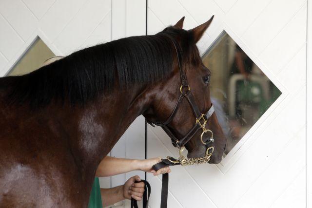 Pferd schaut durch ein Fenster in die Auktionshalle. www.galoppfoto.de