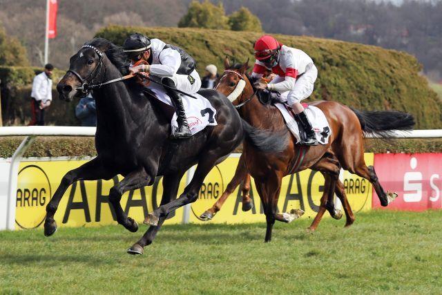 A Derby horse? Diamantis, winning at Düsseldorf. www.galoppfoto.de - Stephanie Gruttmann