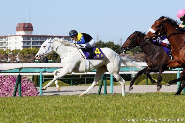 Sodashi bei ihrem klassischen Sieg in Hanshin. Foto: Japan Racing Association