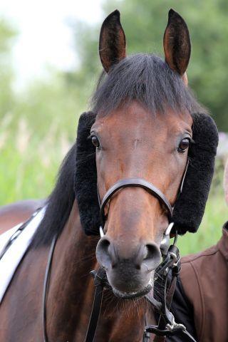Der Derbyvierte Lord Charming besitzt noch eine Nennung für den Prix du Prince d'Orange. www.galoppfoto.de - Sabine Brose