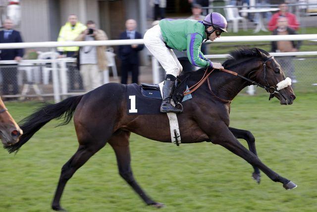 Wild Horse könnte im Premio Ambrosiano in die Saison starten. www.galoppfoto.de - Frank Sorge