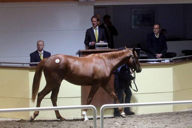 90.000 Euro zahlte Peter Schiergen für diese vom Gestüt Römerhof als Agent angebotene Rock of Gibraltar-Tochter aus der Landia. www.galoppfoto.de