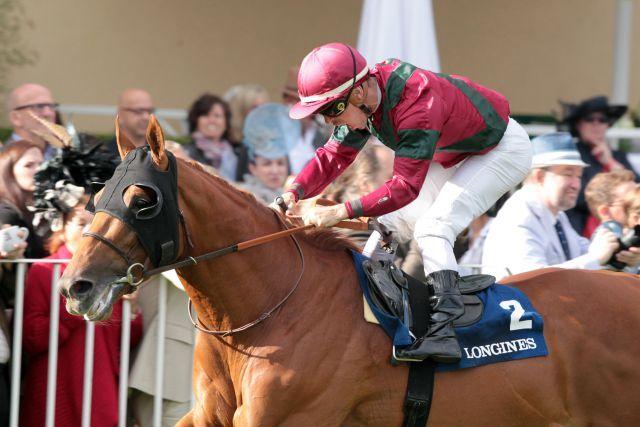 Macht er's noch einmal? Prince Gibraltar ist der Favorit im Großen Preis von Bayern. www.galoppfoto.de - Frank Sorge