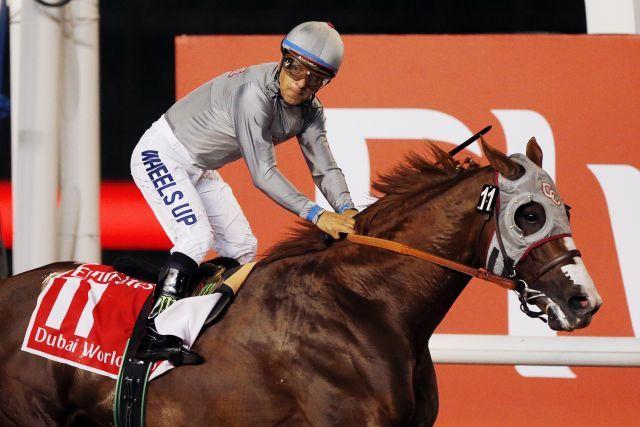 Der Superstar California Chrome soll den Pegasus World Cup gewinnen. www.galoppfoto.de