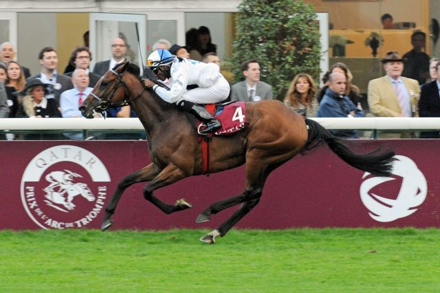 Altano versucht sich Sonntag erneut im Prix Royal-Oak. 2013 wurde er Achter. Foto (Archiv): www.galoppfoto.de - John James Clark