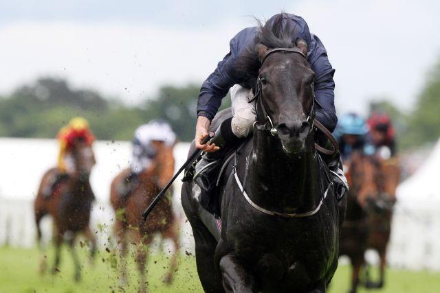 Als einer von zahlreichen O'Brien-Pferden könnte Caravaggio sein Saisondebüt an Ostern geben. www.galoppfoto.de - Frank Sorge