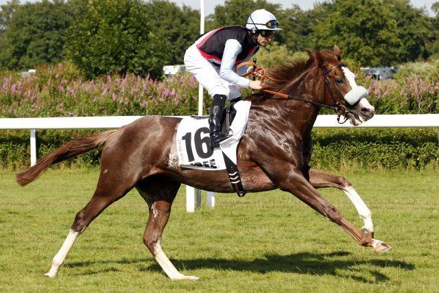 Zwei Deutsche im Gran Premio del Jockey Club? Der Derbydritte Open Your Heart könnte einer davon sein. Foto: www.galoppfoto.de - Frank Sorge