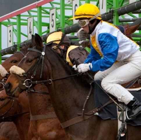 Sabrina Wandt gewann am letzten Renntag gleich dreimal, auch mit der Nummer 5, Annankrista im Tiger Hill-Rennen. Foto: Frank Nolting