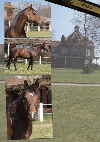 Areion ist der meistbeschäftigste Stallion 2011 in Deutschland. Foto www.dequia.de - Silvia Göldner