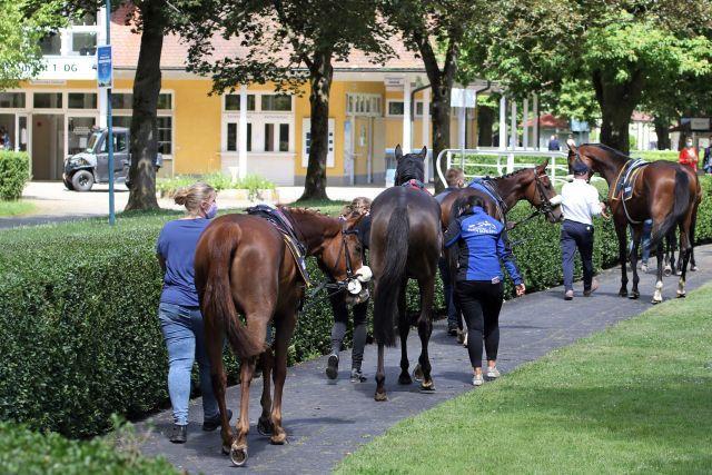Auch die Große Woche muss nach Stand der Dinge wohl fast ohne Zuschauer stattfinden, nur 500 dürfen dabei sein. www.galoppfoto.de - Sarah Bauer