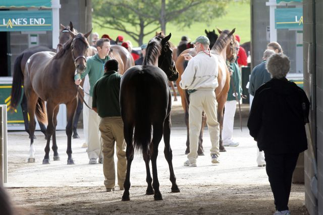 Andrang bei der Auktion in Keeneland. Foto Keeneland Sales/offiziell