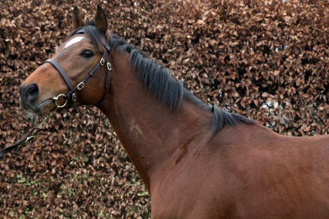 Best Solution hatte dieses Jahr besonders viel zu tun. www.galoppfoto.de - Sandra Scherning