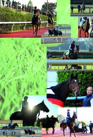 Danedream am Donnerstag beim Training in Tokio mit Cynthia Atasoy. Fotos: Yasuo Ito • www.shibashuji.com Kazushi Ishida • himawarikazushi.blogspot.com