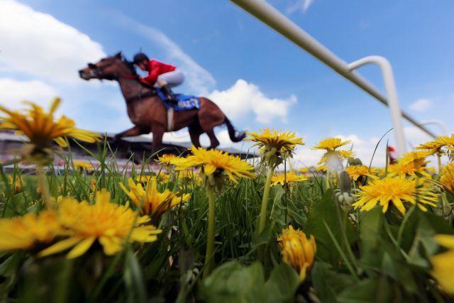 Auf acht verschiedenen Rennbahnen findet das galoppsportliche Frühlings-Erwachen statt. ww.galoppfoto.de - Frank Sorge
