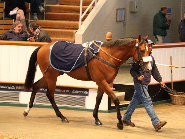 Der Oasis Dream-Sohn für 160.000 gns. www.tattersalls.com