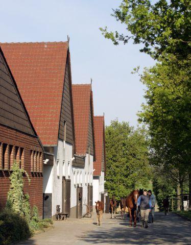 Die Stallanlange im Gestüt Auenquelle. www.galoppfoto.de