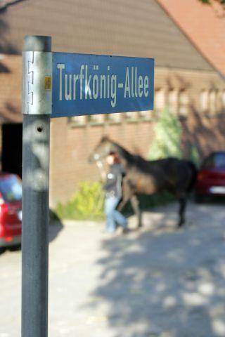 Turfkönig war nicht nur für das Münchner Gr. I-Rennen richtungsweisend gewesen, auch im Gestüt Auenquelle weist er den Weg. www.galoppfoto.de