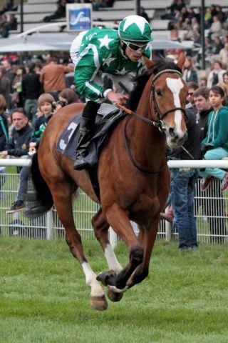 Jetzt in England erfolgreich: Emerald Star und Daniele Porcu - hier beim Aufgalopp in Köln. www.galoppfoto.de  (Archiv) - Sandra Scherning