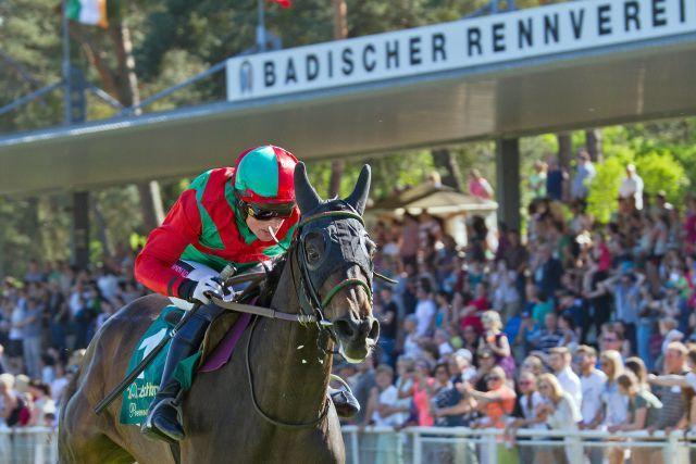 Galopprennen auf der Mannheimer Waldbahn - hier mit Audientia und Jockey Mark Quinlan. www.galoppfoto.de -Sibylle Maus