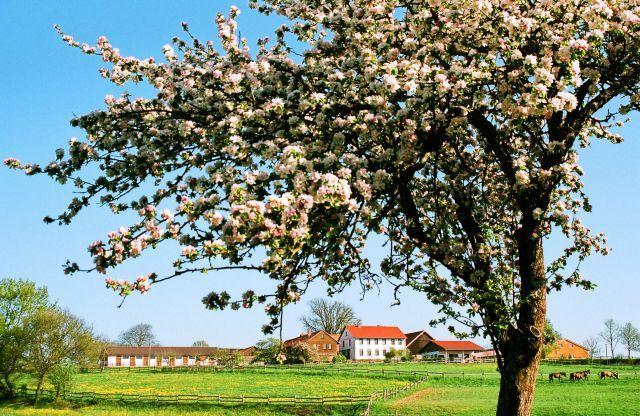 Gestüt Etzean - Frühlingsimpression vor dem oberen Stalltrakt. www.franknolting.com