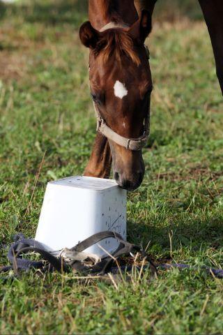 Die Zahl der Fohlen ist stabil geblieben - das kann schon als Erfolg vermeldet werden. www.galoppfoto.de - Frank Sorge