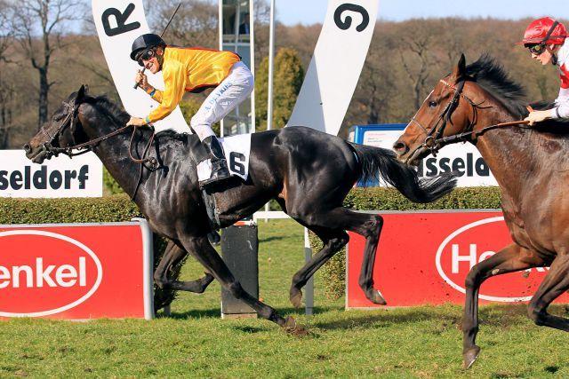 So sah der Einlauf im letzten Jahr aus, die beiden Erstplatzierten treffen wieder aufeinander: Global Thrill (links) gewann im Vorjahr die Wwettenleip-Frühjahrsmeile vor Neatico (rechts). www.duesseldorf-galopp.de - www.klatuso.com