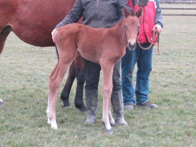 Good Hope brachte das erste in Deutschland geborene Fohlen des im Gestüt Röttgen stationierten Reliable Man im und für das Gestüt Römerhof zur Welt. Foto: privat