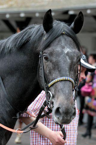 Bleibt ein heißes Eisen für das Derby: Stall Ullmann Guardini. www.galoppfoto.de - Sandra Scherning