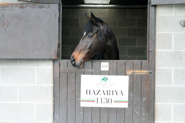 Hazariya war mit 480.000 Euro Salestopperin. Foto: Goffs