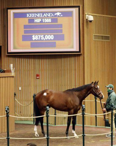Carillo brachte 825.000 Dollar. Foto: Keeneland