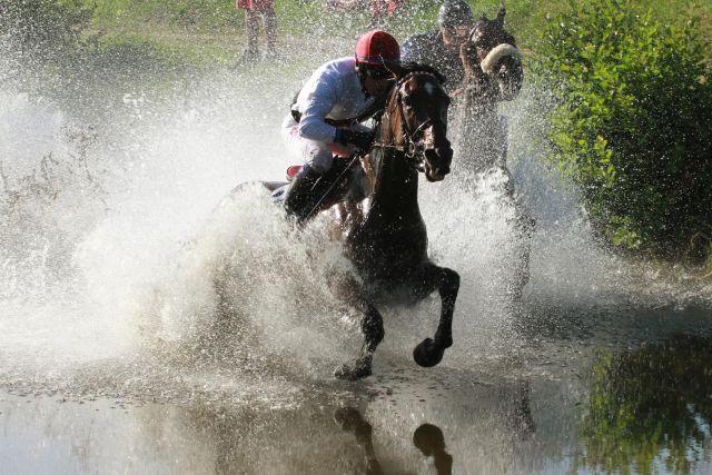 Indian Sun siegt unter Jan Korpas im Seejagdrennen. www.pferde-gtm.de - Katja Gerhardt