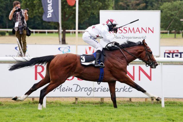 Wurde verkauft, aber bleibt im Land. Der Listensieger und Derbymitfavorit Kellahen. www.galoppfoto.de - Sabine Brose