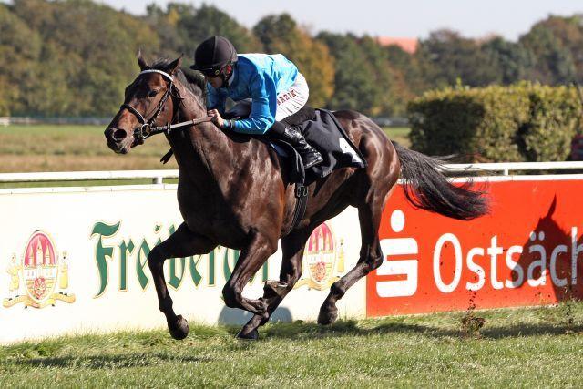 Le Pursang (Samum) ist einer von zwei Schiergen-Startern - hier  mit Filip Minarik bei seinem Dresdner Sieg. www.galoppfoto.de