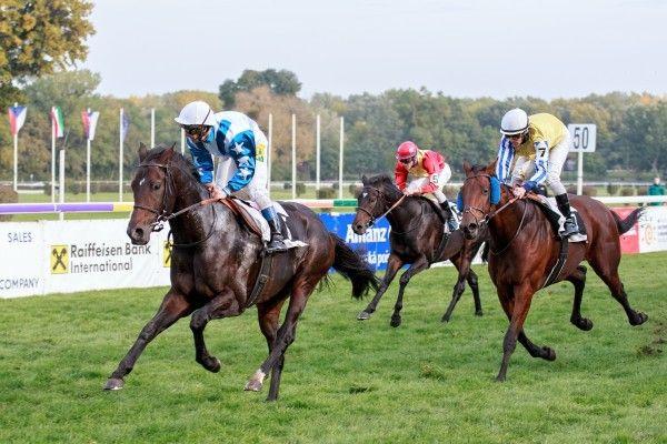 Legionär bleibt eines der besten Pferde Osteuropas. Foto: Karel Nemec
