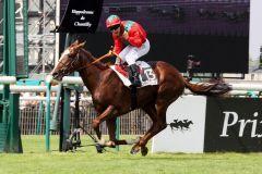 Lope de Vega, hier bei seinem Sieg im Französischen Derby 2010, beendet seine Rennkarriere. Foto: Sandra Scherning