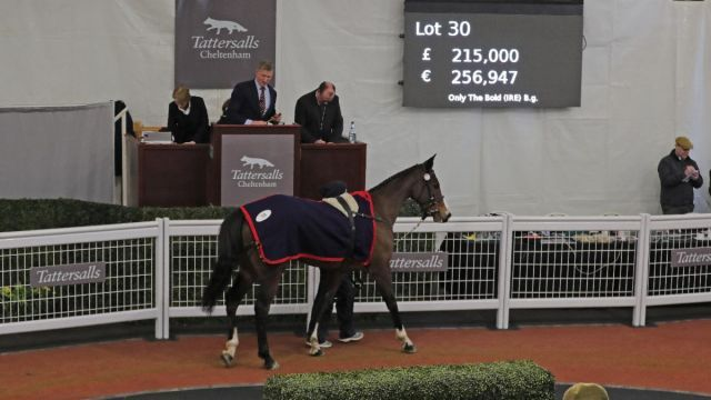 Only the Bold, der Salestopper. Foto: Tattersalls