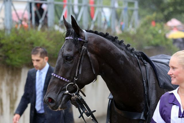 First Group win for Palace Prince. ©Dr. Jens Fuchs