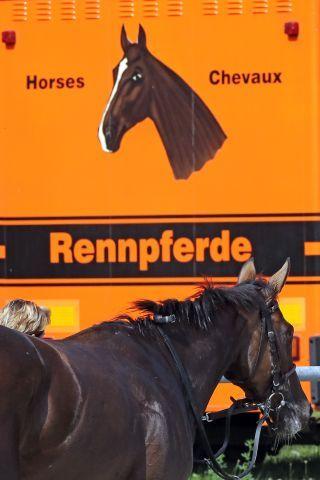 Ziel der Vollblutzucht ist es, Pferde zu züchten, die erfolgreich Rennen laufen, aber: Was passiert mit den Pferden nach dem Ende der Karriere? Copyright: galoppfoto.de