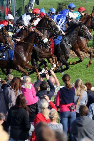 Pferde und Jockeys beim Start in Hannover. www.galoppfoto.de - Frank Sorge
