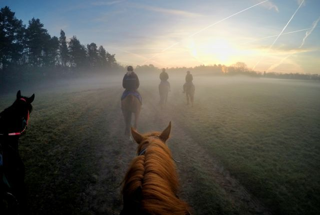 Passend zum Titel der Sendereihe 'Geheimnisvolle Orte': Pferde und Reiter am Morgen auf der Bollensdorfer Trainierbahn. www.galoppfoto.de - Frank Sorge