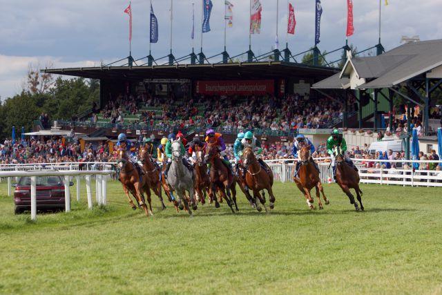 Pferderennen in Bad Harzburg, das Feld vor der Tribüne. www.galoppfoto.de