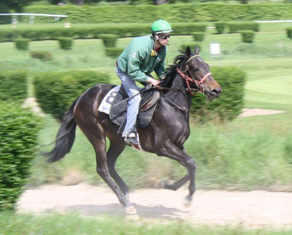 Der italienische Jockey Daniele Porcu nimmt am Sonntag beim Saisonfinale auf der Mülheimer Galopprennbahn fünf Ritte wahr. Foto: Redaktion MSPW - www.muelheim-galopp.de