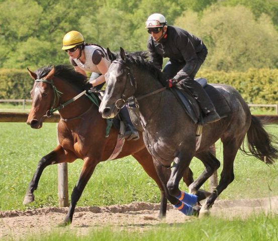 Zwei Berglar-Pferde bei der Arbeit in Ravensberg: Protectionist (links), der in Bremen das Ticket für Hamburg lösen soll, und Nuntius, der nach dem Union-Rennen aus dem Derby abgemeldet wurde. www.rennstall-woehler.de - Susanne Wöhler