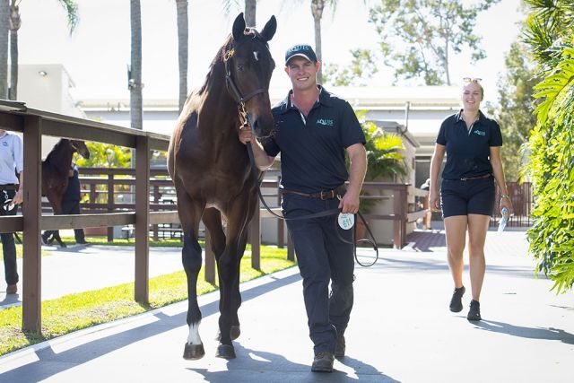 Der Salestopper von Redoute's Choice. Foto: Magic Millions