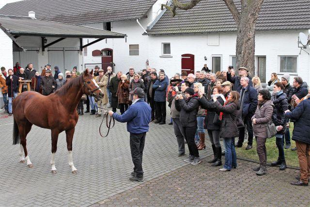 Reges Interesse gab es schon im letzten Jahr bei der Präsentation von Adlerflug & Co. in Bergheim. www.galoppfoto.de - Sandra Scherning