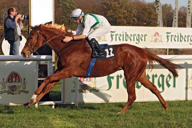 Satellite gewinnt mit Stephen Hellyn in Dresden. www.galoppfoto.de - Sabine Brose