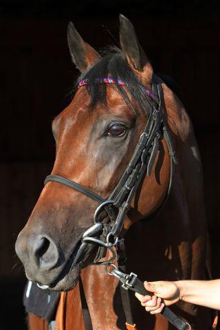 Ross läuft als einziges deutsches Pferd am World Cup Day. www.galoppfoto.de - Sabine Brose