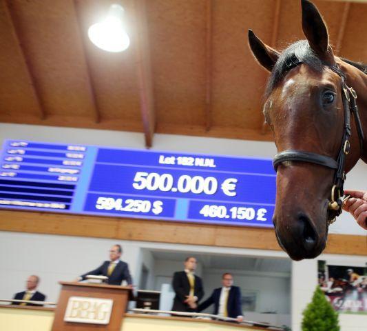 Topseller der Auktion - Lot 182, Dschingis First im Auktionsring. www.galoppfoto.de - Frank Sorge